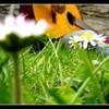 petit-papillon-joli