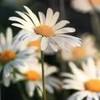 x-Flower-Love