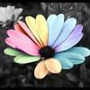 folles-fleurs