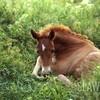I-love-a-horse