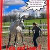 ethologie-horses