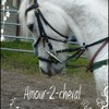 amour-2-cheval