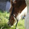 le-poney-du-bonheur