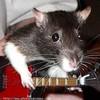 Mes-Rats-Et-Moi