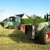 anto29260