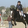 horse-horses