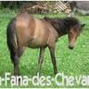 La-Fana-des-Chevaux