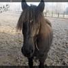 chevaux-noirs