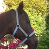 love-horse04