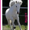 x-Little-horse