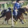 xx-fan-de-pony-games-xx