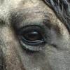 chevaux-80