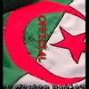 les-algerien-united