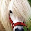 CRUNCH-cheval