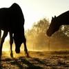 PASSiiONS-HORSES