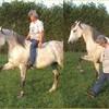 chevauxharas