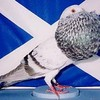 Pigeons-mohamed