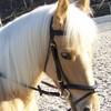 love-horse-lolita