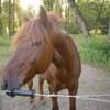 ponylovehorse