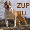 ZUP-21REPRESENTE