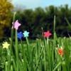 flower-en-sucre