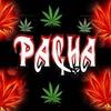 pacha-2008-ata