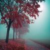 silence-I-dream