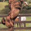 horse1112