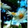 Fleurr-de-Liie