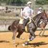 horseballeur-du-81