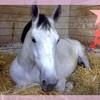 horse-fan2B
