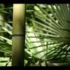 Une-douceur-tropical