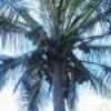 newcaledonie