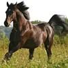 sab-me-1-cheval