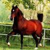 mimi-my-horse