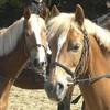 horses4ever-x3