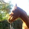Xx-Moii-Horse-love-Xx