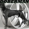 doberman-Officiels