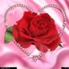 dwiba-rose