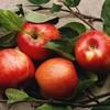 haute-comme-4-pommes