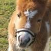 passion-chevaux02