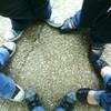 pauline-aisne-picarde02