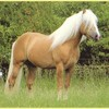 love-banquise-horsing