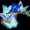 papillon-bleu04