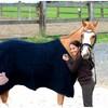 Dream-horses02