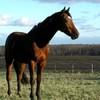 c0nc0urs-piix-horse