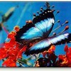 butterflies71