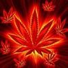 cannabis04