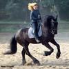 max-della-chevaux