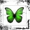 danger-papillon